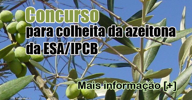 Concurso para colheita de azeitona do olival da ESA - IPCB